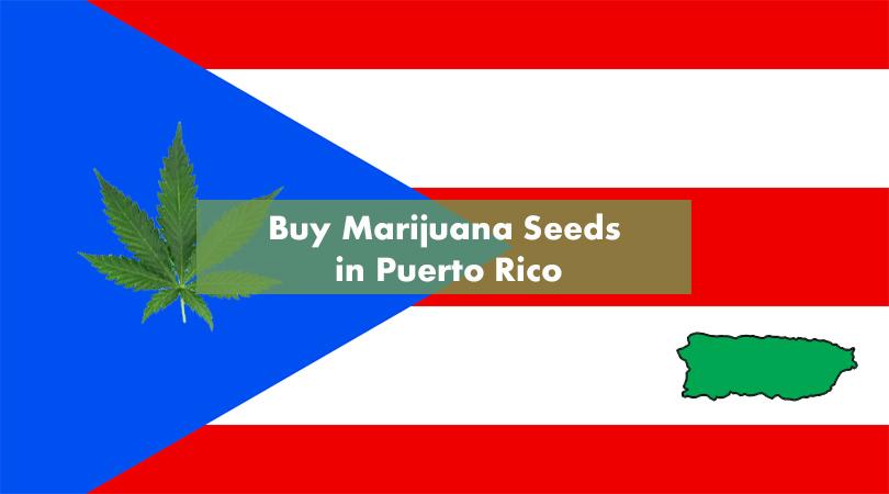 Where to Buy Marijuana Seeds in Puerto Rico Cover Photo