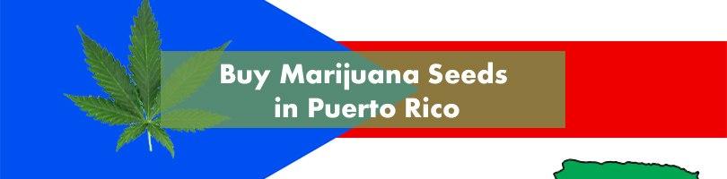 Where to Buy Marijuana Seeds in Puerto Rico Featured Image