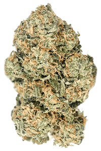 White Tahoe Cookies Seeds Bud