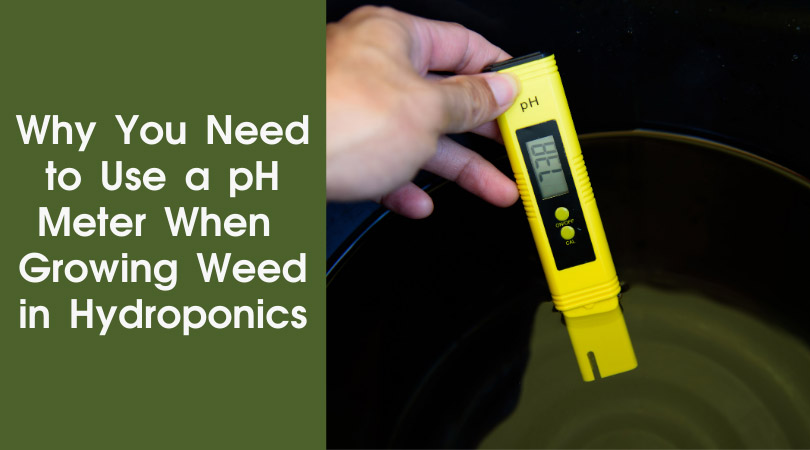 Why you need to use a ph meter when growing weed in hydroponics cover photo