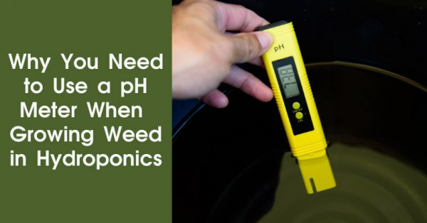 Why you need to use a ph meter when growing weed in hydroponics featured image