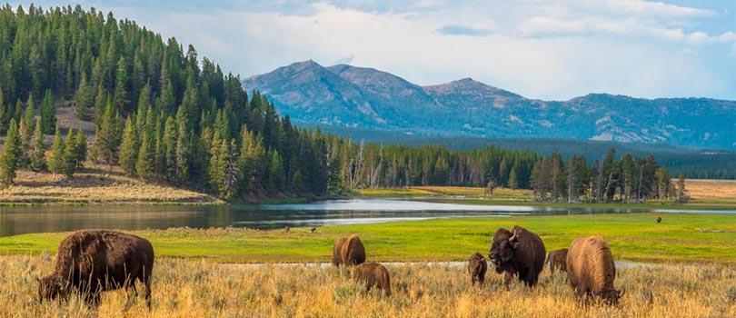 Wyoming Climate Yellowstone