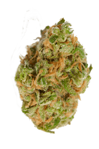 Cannatonic Seeds Bud