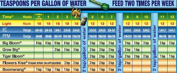 foxfarm feeding schedule