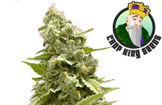 Crop King Seeds Girl Scout Cookies Feminized Seeds