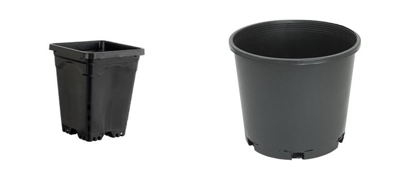 potting sizes for transplanting seedlings